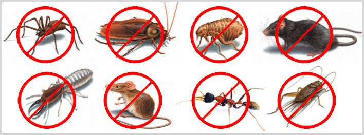 Pest Management Brisbane & Pest Control Brisbane